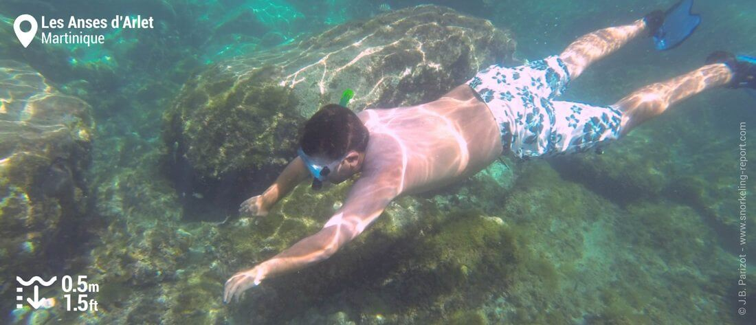 Snorkeling at Anses d'Arlet, Martinique