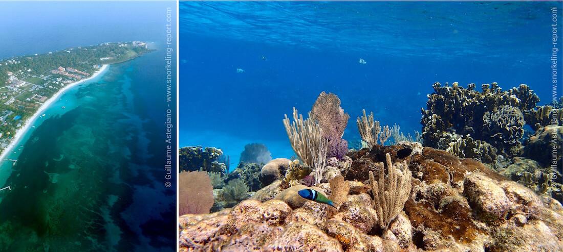 Snorkeling sur le récif corallien de West Bay, Roatan
