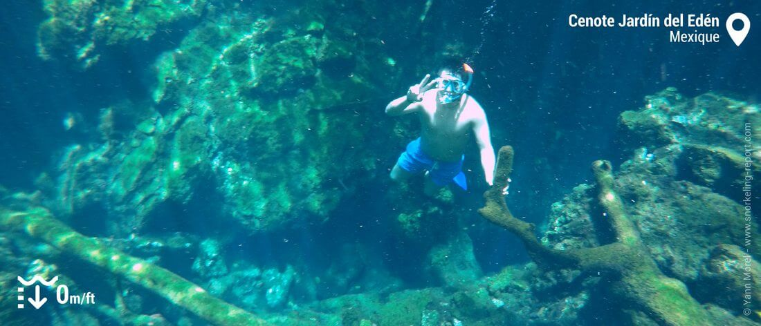 Snorkeling au cenote Jardin del Eden, Mexique