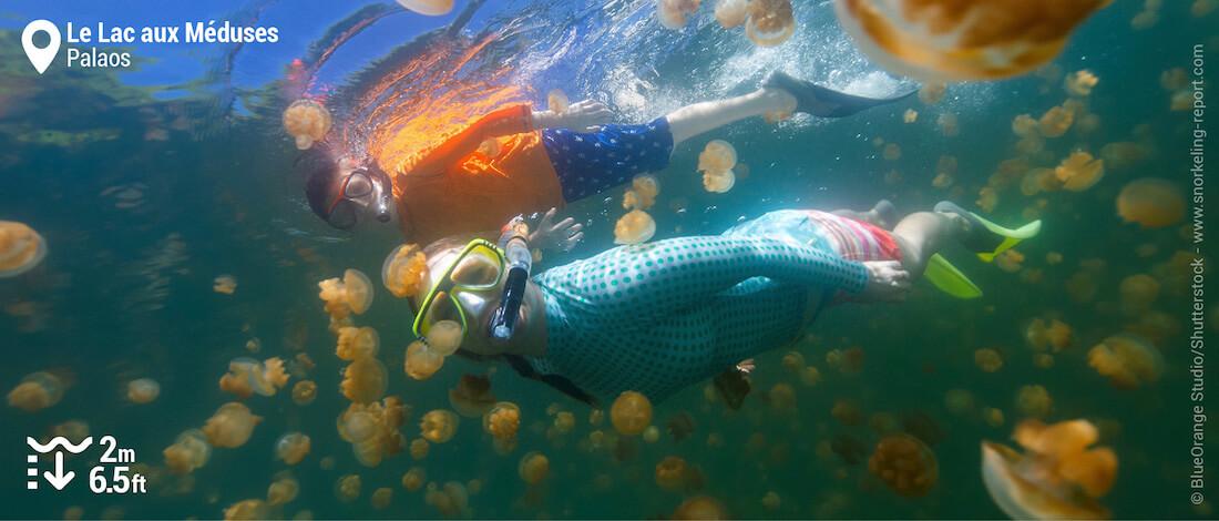 Snorkeling avec des méduses dorées dans le Lac aux Méduses, Palaos
