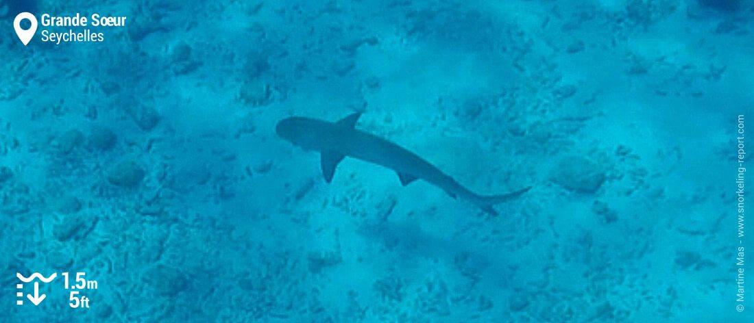 Snorkeling avec des requins à Grande Soeur, Seychelles