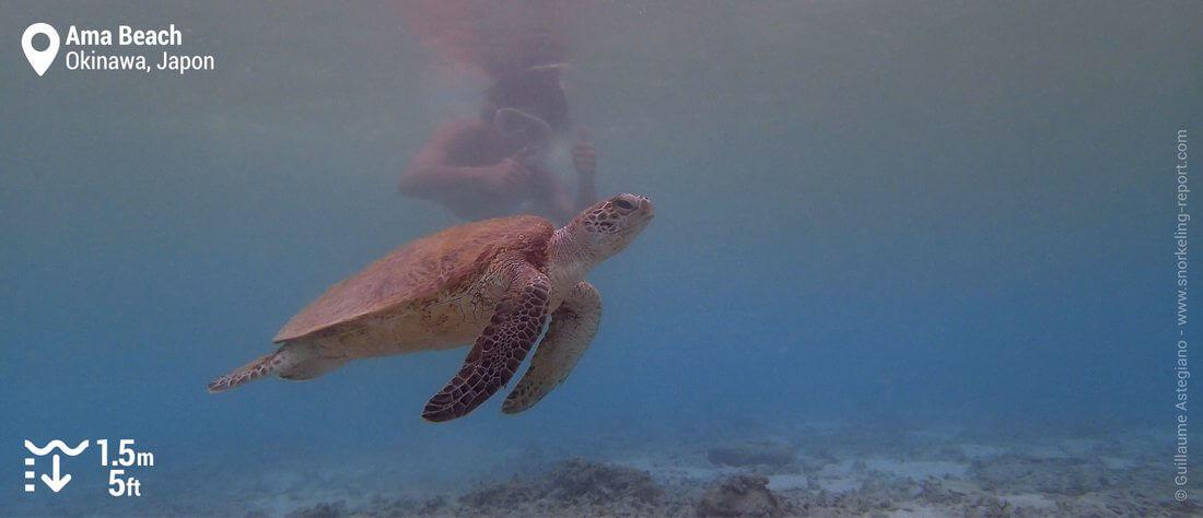 Snorkeling avec une tortue à Ama Beach, Zamami