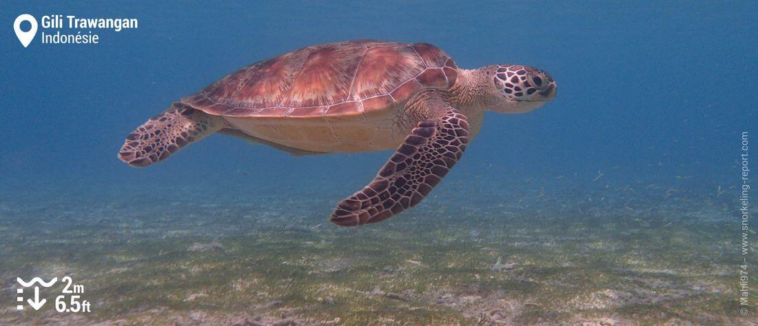 Snorkeling avec les tortues de Gili Trawangan, Indonésie