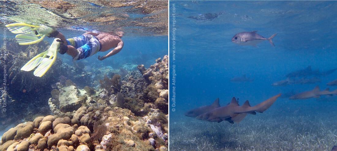 Snorkeling à Ambergris Caye - San Pedro, Belize
