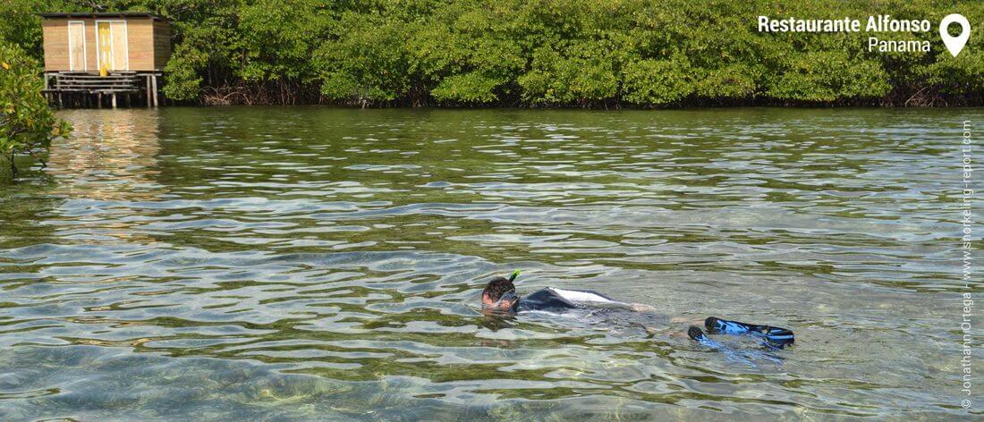 Mangrove snorkeling in Bocas del Toro