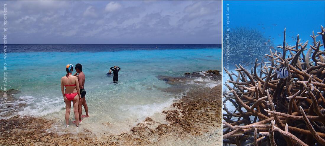 Snorkeling à Bonaire