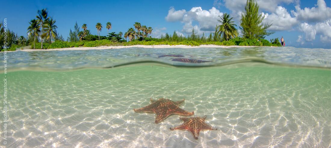 Snorkeling à Starfish Point, Îles Caïmans
