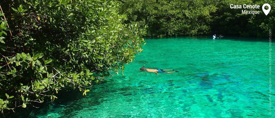 Snorkeling au Casa Cenote, Mexique