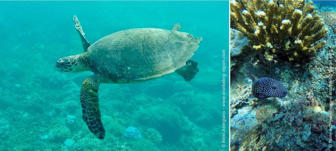 Snorkeling Coiba National Park, Panama