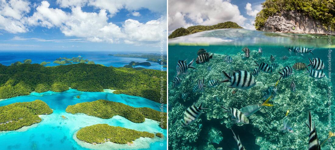 Snorkeling sur les récifs coralliens du Palaos
