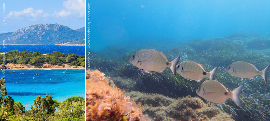 Snorkeling at Palombaggia Beach, Corsica