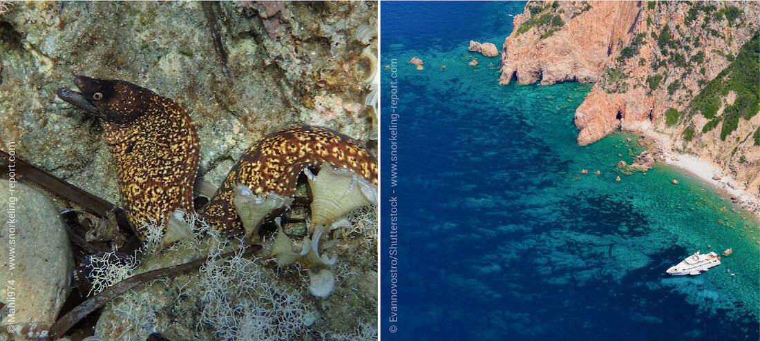 Snorkeling in Corsica