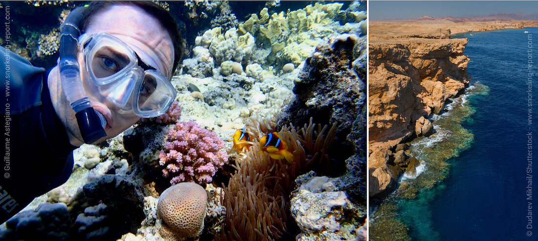 Snorkeling with Red Sea clownfish in Egypt
