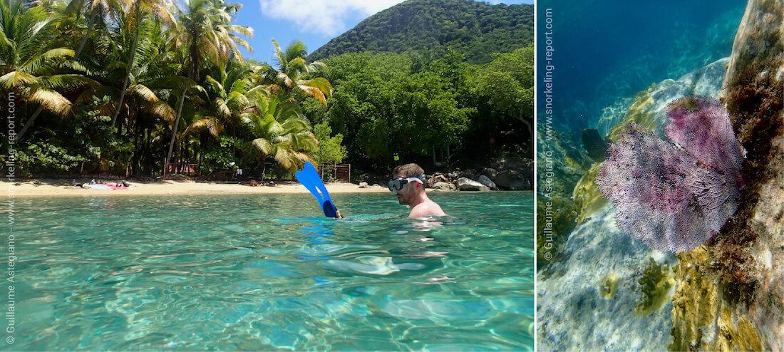 Snorkeling dans l'archipel des Saintes, Guadeloupe