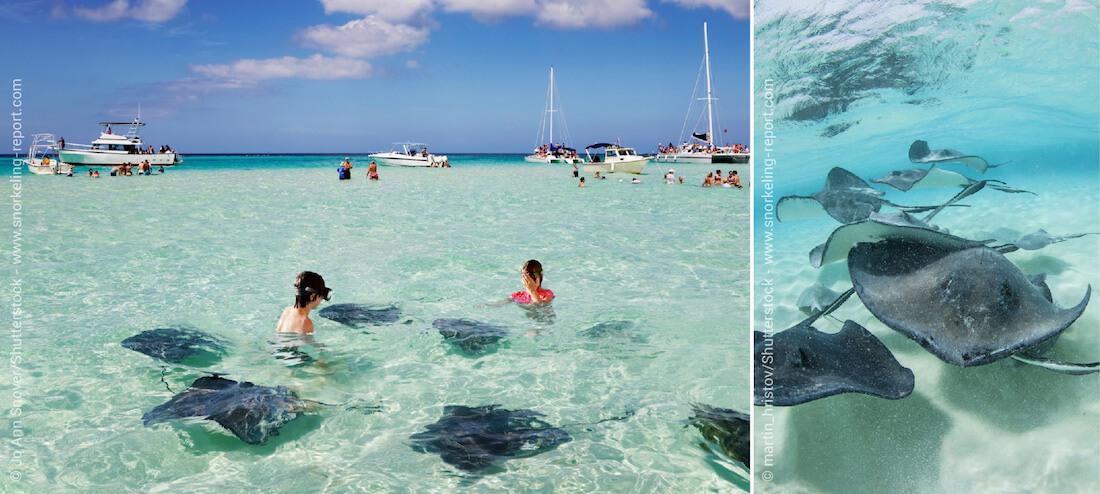 Snorkeling à Stingray City, Îles Caïmans