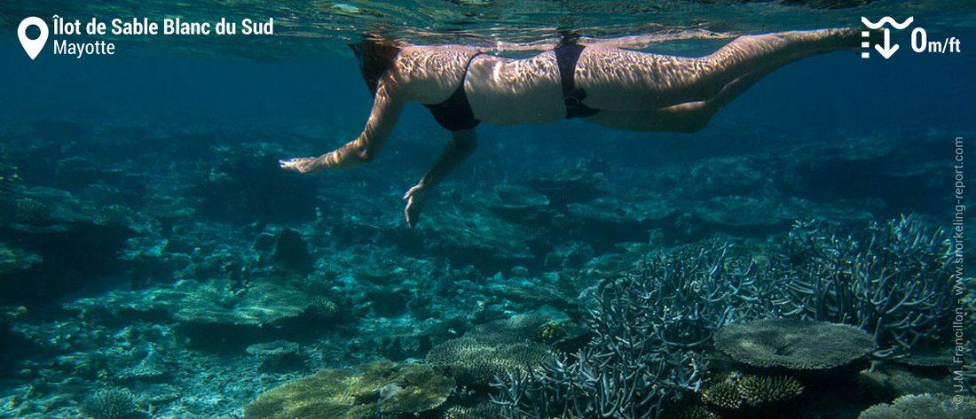 Snorkeling at îlot de Sable Blanc du Sud