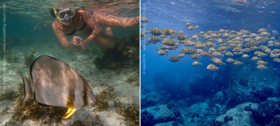 Snorkeling in La Digue Island, Seychelles