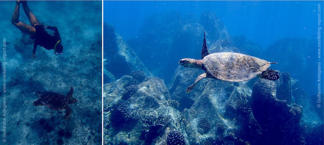 Snorkeling avec les tortues imbriquées de l'île de la Digue, Seychelles