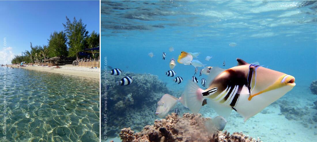 Snorkeling dans les lagons de l'île de la Réunion, Océan Indien