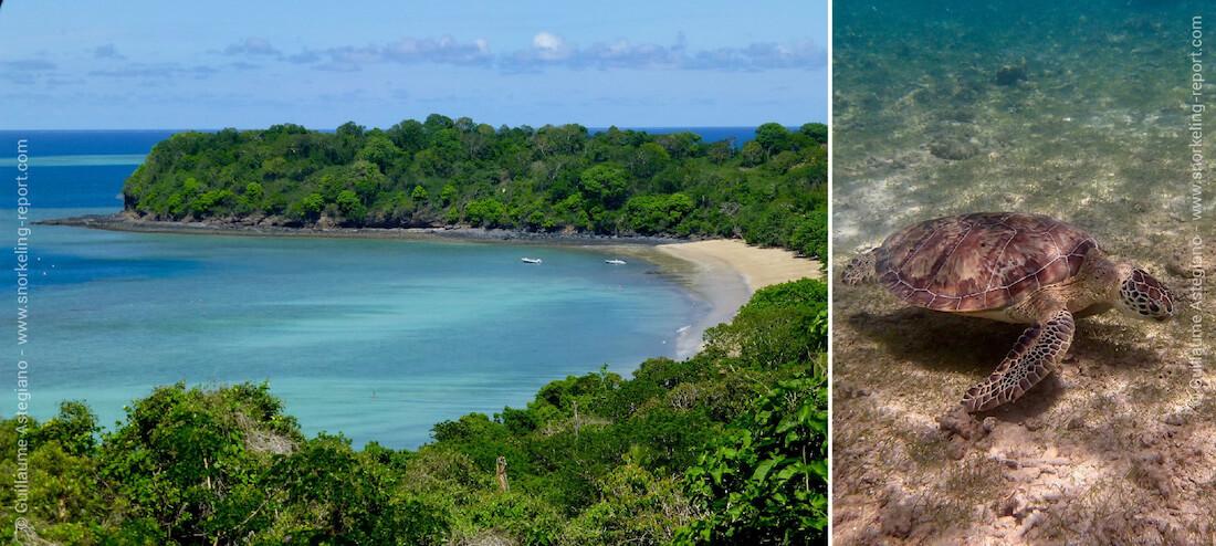 Snorkeling avec les tortues vertes de N'Gouja, Mayotte