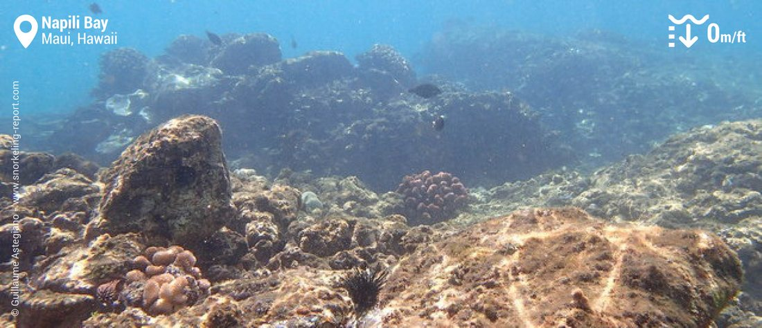Snorkeling Napili Bay
