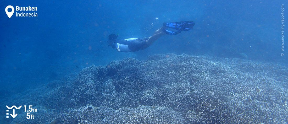 Snorkeling Bunaken Island reef drop-off, Indonesia