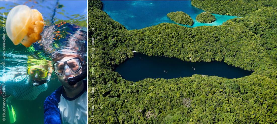 Snorkeling au Lac aux Méduses, Palaos