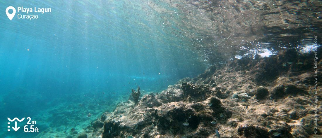 Snorkeling at Playa Lagun, Curacao