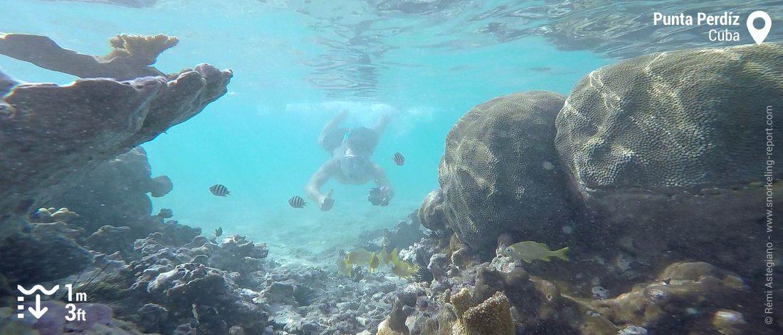 Snorkeler at Punta Perdiz, Cuba