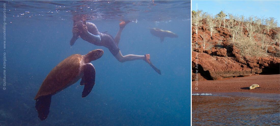 Snorkeling à l'île Rabida, Galapagos
