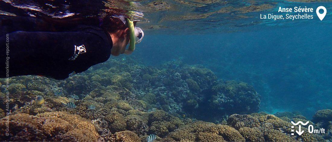 Snorkeling sur le récif corallien de l'Anse Sévère, La Digue