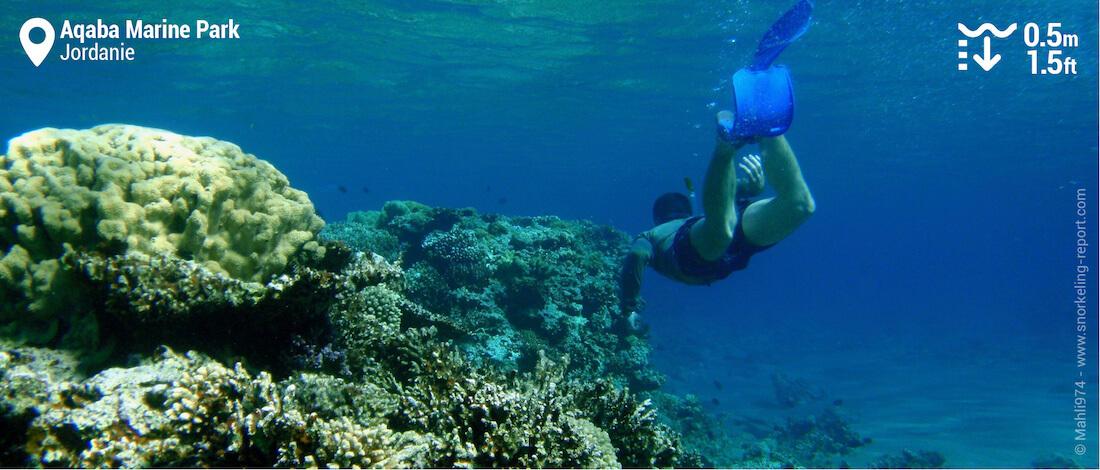 Snorkeling sur le récif d'Aqaba, Jordanie