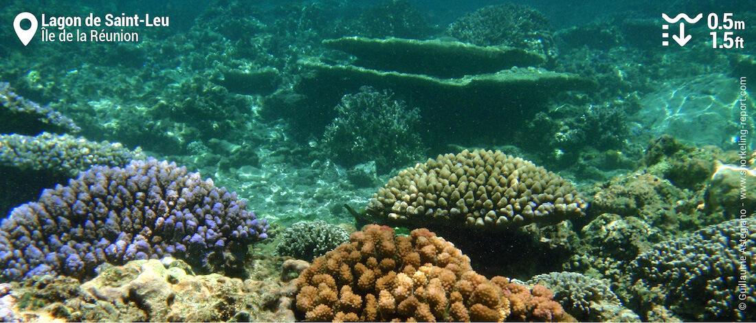 Récif de corail au lagon de Saint-Leu, La Réunion