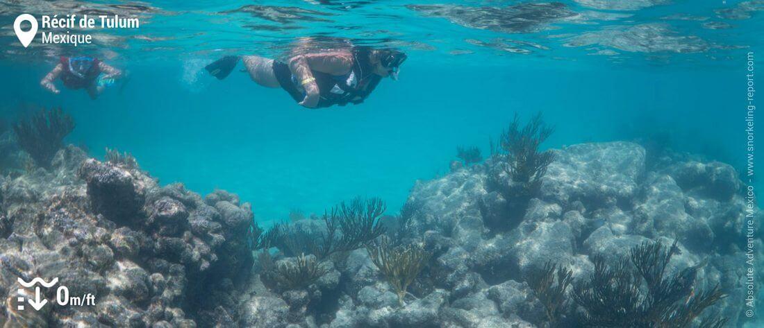 Snorkeling sur le récif de Tulum, Mexique