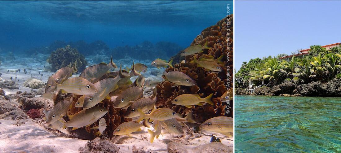 Snorkeling à Roatan, Islas de la Bahia