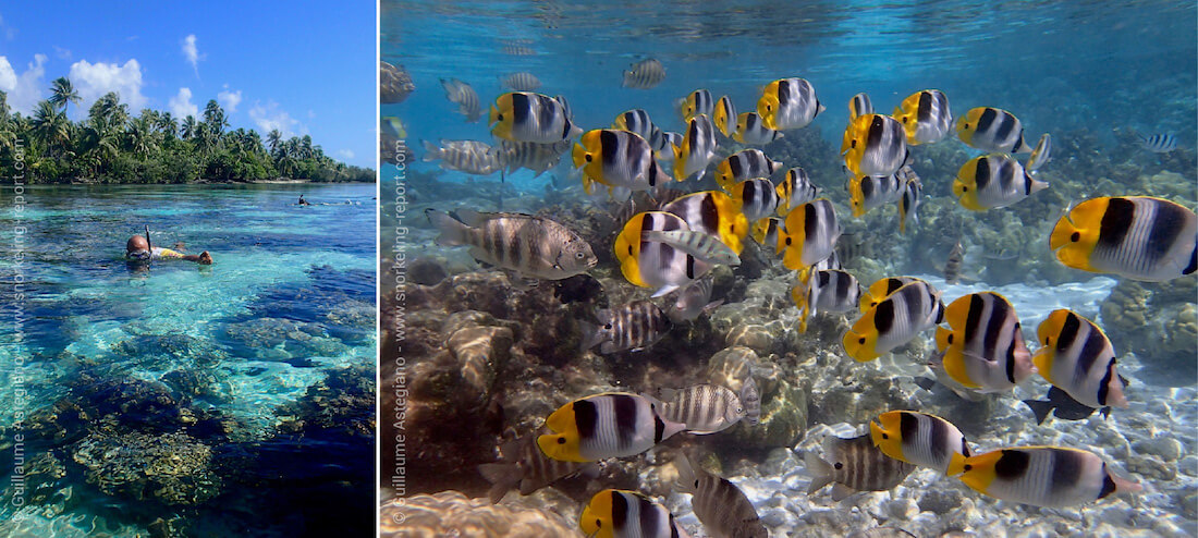 Snorkeling the Coral Garden of Tahaa, Society Islands
