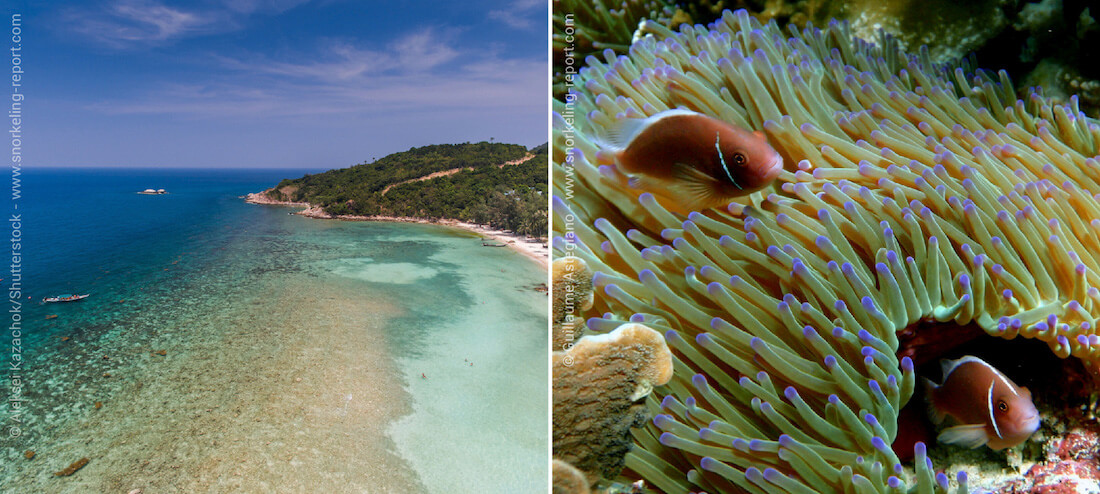 Coral reef and clownfish - Snorkeling in Thailand
