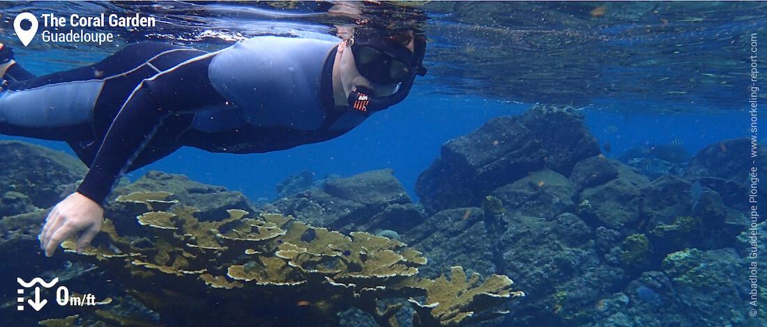 Snorkeling the Pigeon islets, Malendure, Guadeloupe
