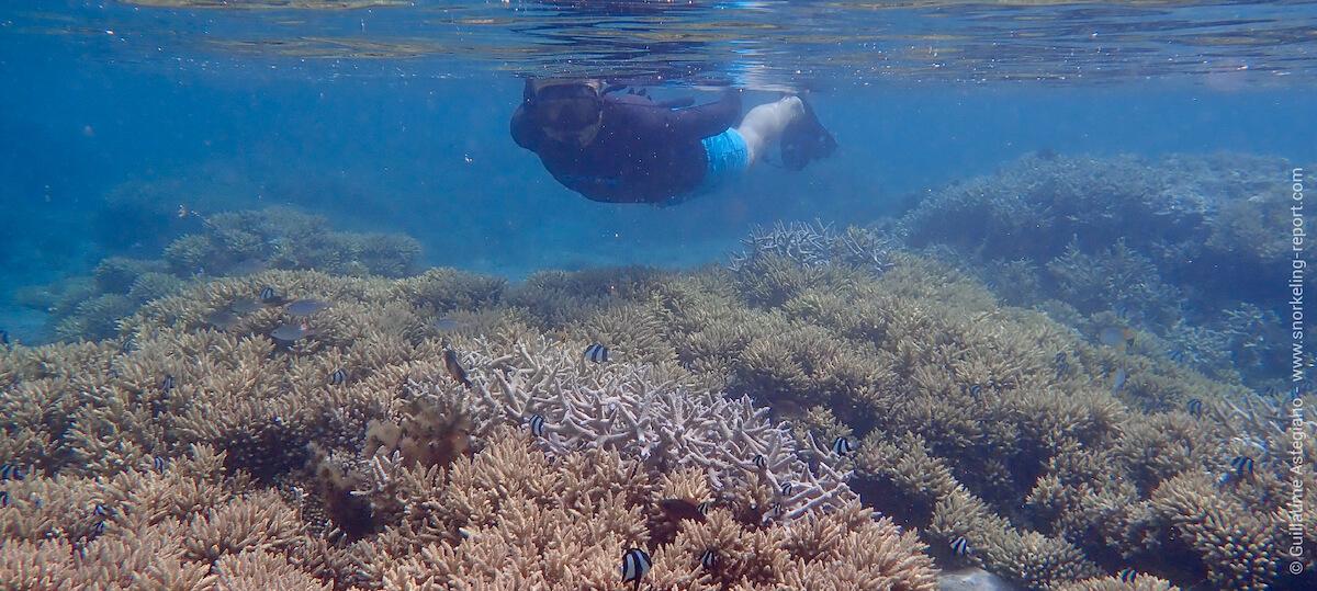 Snorkeling Trou d'Eau, La Réunion