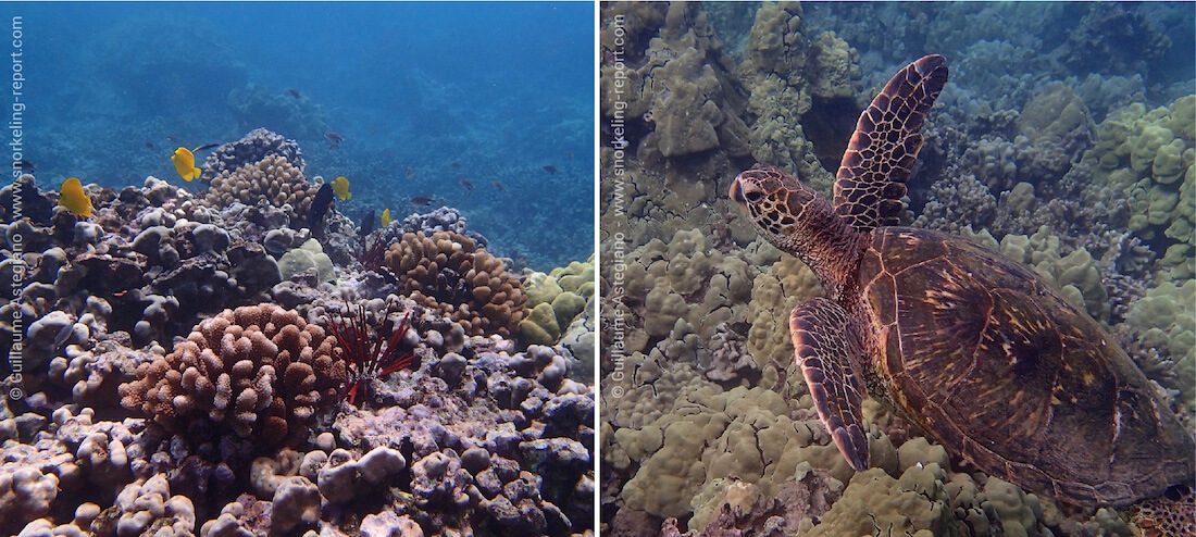 Snorkeling Turtle Town and Ahihi Kinau, Maui