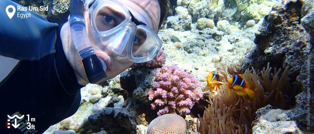 Snorkeling with clownfish at Ras Um Sid, Sharm el-Sheikh