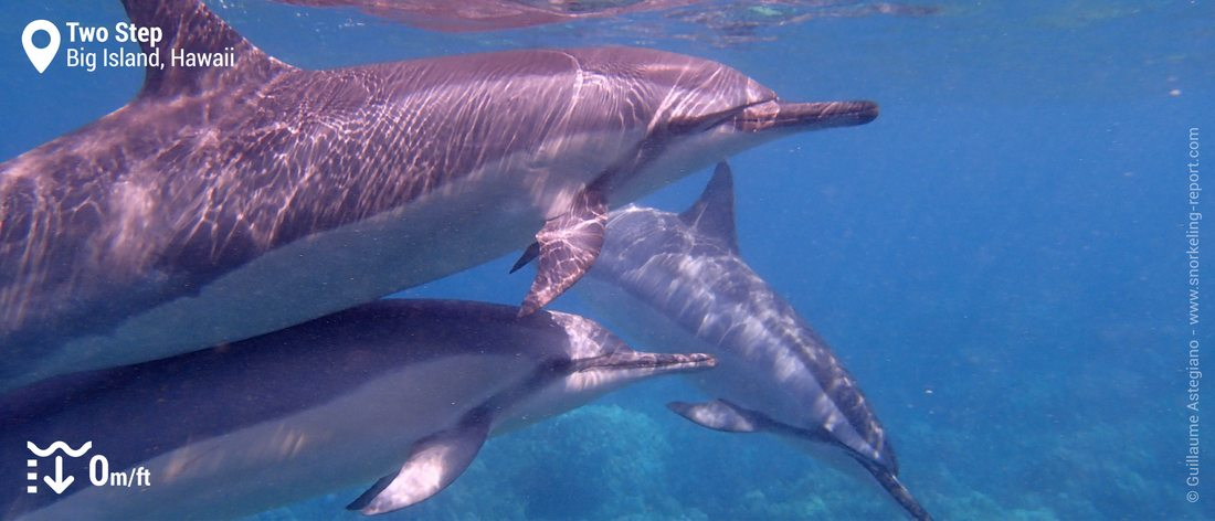 Snorkeling with Hawaiian spinner dolphins at Two Step