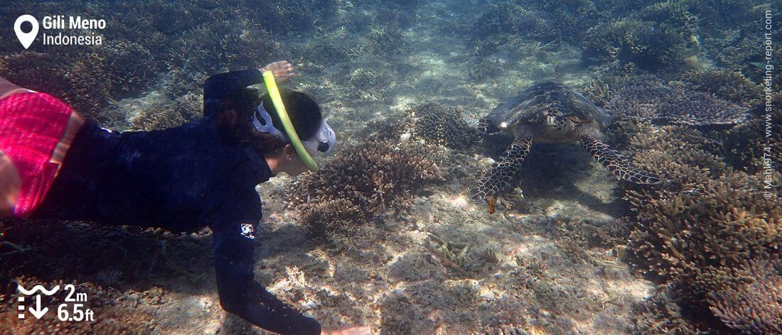 Snorkeling with hawksbill sea turtle at Gili Meno