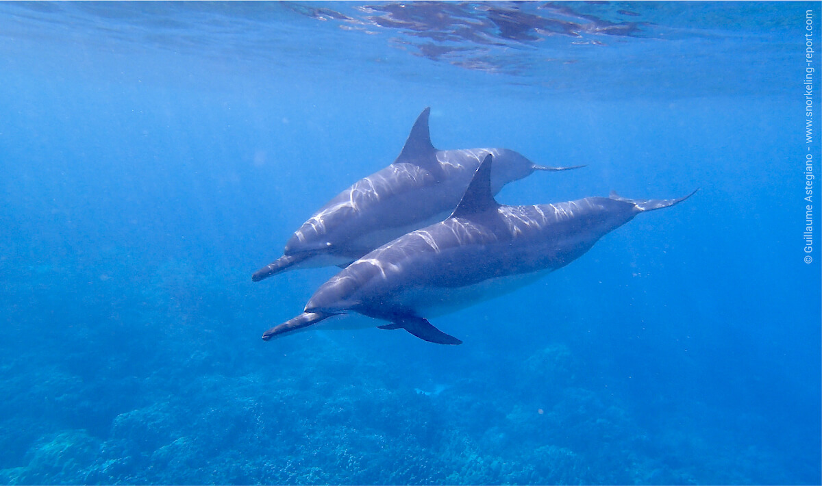 Snorkeling with dolphins in Two Step