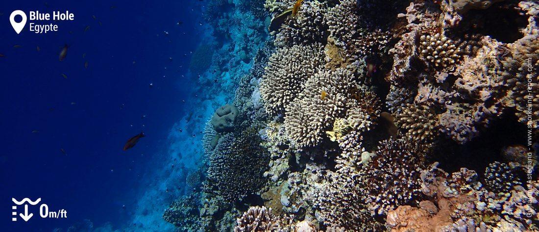 Le tombant récifal du Blue Hole de Dahab, Mer Rouge