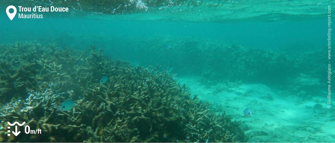 Snorkeling Trou d'Eau Douce lagoon, Mauritius