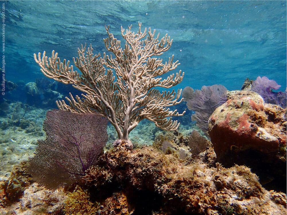 Snorkeling West End | Roatan | Honduras
