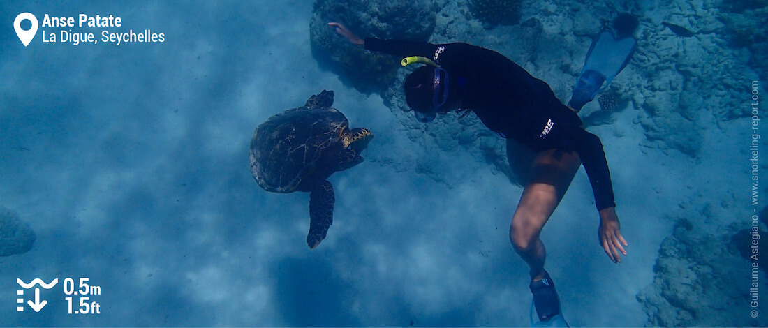 Snorkeling with hawksbill sea turtle at Anse Patate, Seychelles