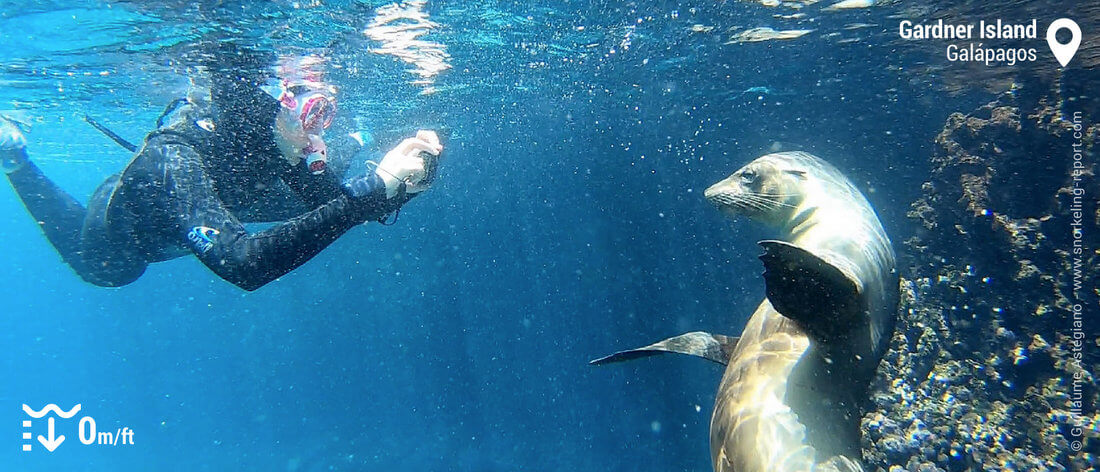 Snorkeling with sea lion in Gardner Island, Galapagos