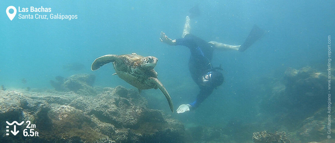 Snorkeling with sea turtle in Las Bachas, Galapagos